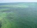 Florida live coral reefs